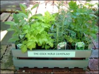 The Essex Herb Company